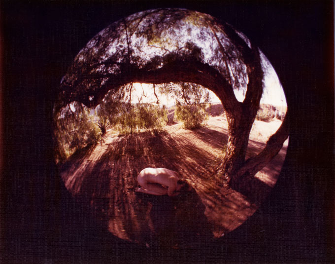 Fish Eye Nude in the Arch of an Oak