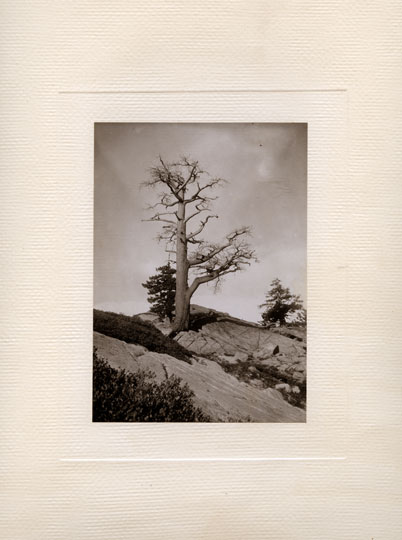 High Sierra Tree-scape by Archibald Treat, c. 1900